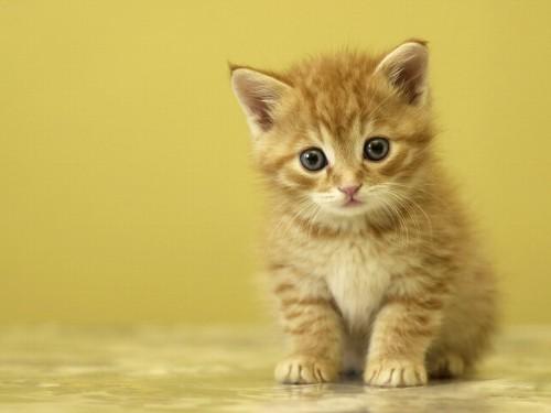 Blissfully Cute Baby Animals Cat Kitten 4