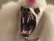 Goosebumps poodle