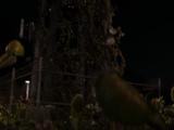 E. Ville Creeper's Plants
