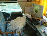 Gooseblog
