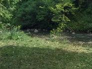 Werewolf Skin - Wolf Creek - Creek