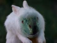 Lizard Rabbit Becca