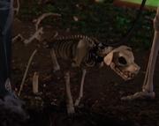 Skeleton Dog Haunted Halloween
