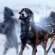 Wildling Hound