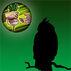 Owl Token Barter