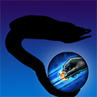 Eel Token Steal