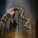 Volantene Python