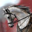 Jaime's White Horse