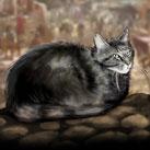 Lannisport Cat