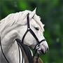 Arya's Horse
