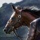 Brienne's Horse