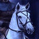 Lyanna's White Horse