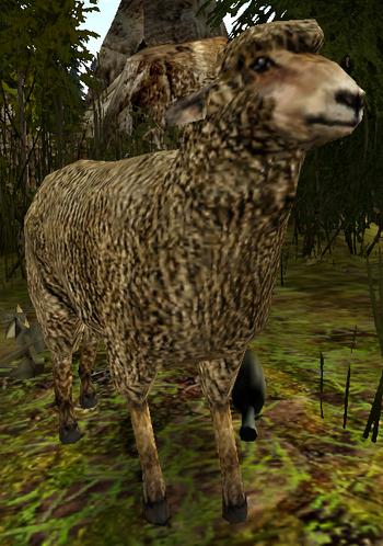 Owca w Gothic II