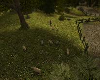 Pastwisko na farmie Lobarta (by SpY)
