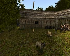 Małe stado owiec na farmie Onara (by SpY)