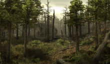 Myrtana Forest burned
