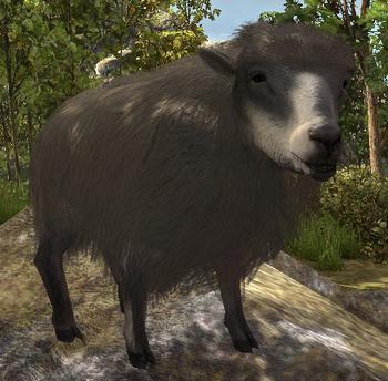 Owca w ArcaniA