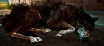 Śpiący wilk