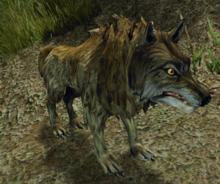 Wilk (zwierzę) (CM3)