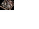 Płytka z pancerza pełzacza