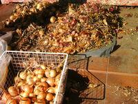 Podsuszanie cebuli
