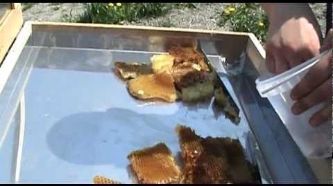 Słoneczna wytapiarka wosku