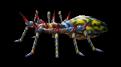 Tarantula II