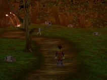Witt Forest Path