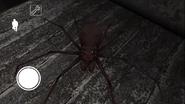 Spidernewglitch