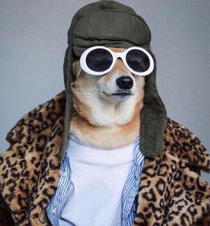 Dog swag