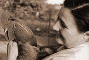 1963za128-chicken-Gusti-SEPIA
