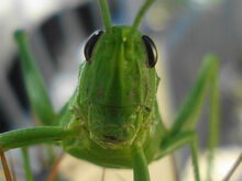 GrassHopper About