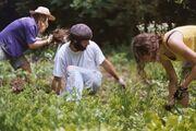PlantingWeedingHarvesting