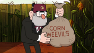 S2e16 corn weevils