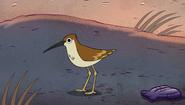 S2e12 bird