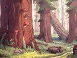 Bosque de Gravity Falls