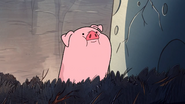 S1e18 Waddles looking around