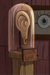 Oreja gigante en la cabaña