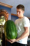 Stephen's Watermelon