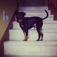 Roscoe's on stairs