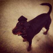 Roscoe Photo 3