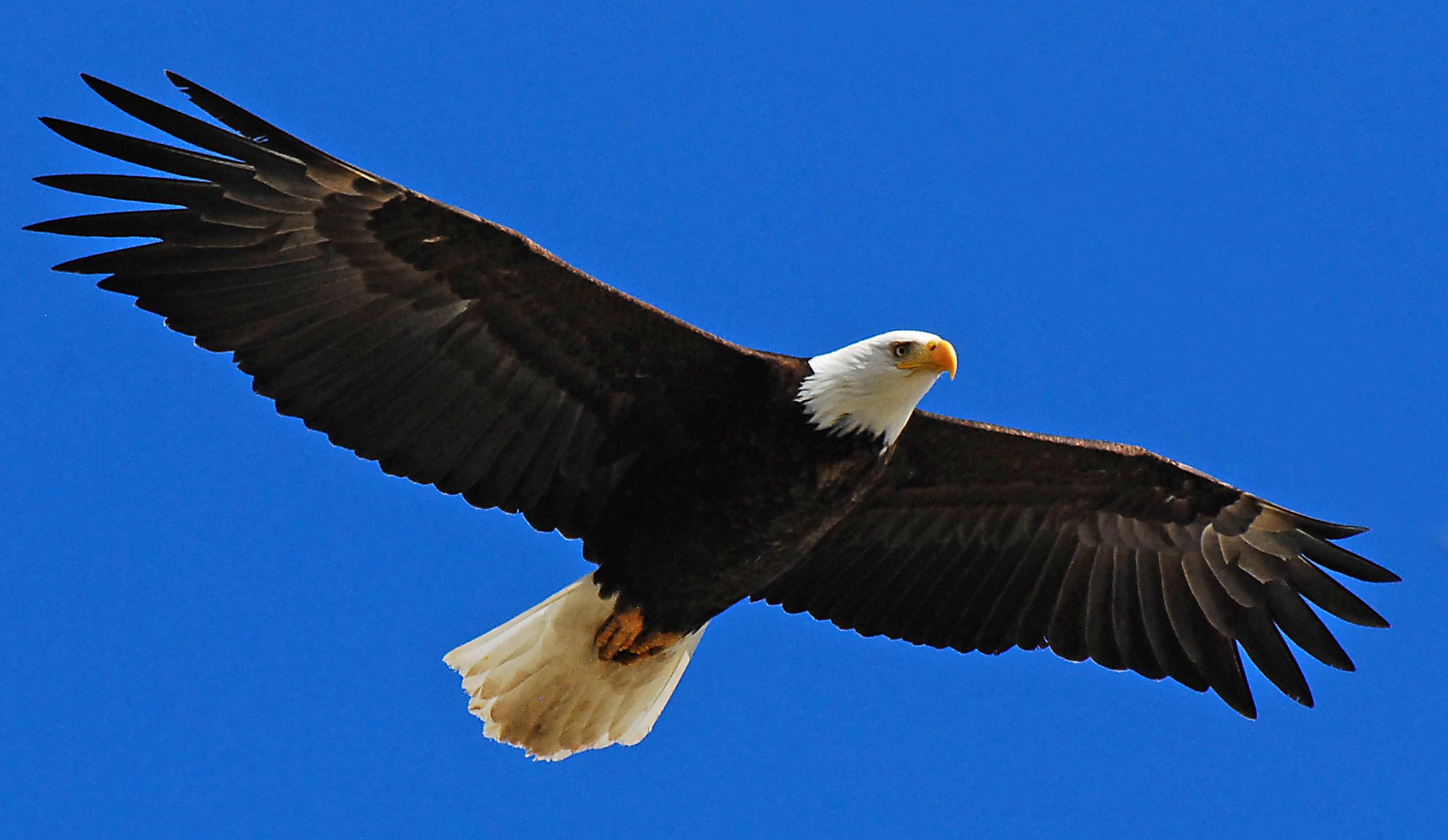Sacred Birds Greek Mythology Wiki Fandom Powered By Wikia