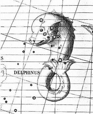 Delphinus2