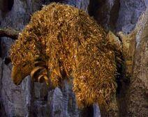 Golden Fleece 6325