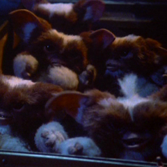 The first batch of mogwais in the film <i>Gremlins</i>.