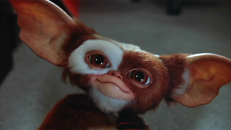 Gizmo | Gremlins Wiki | FANDOM powered by Wikia