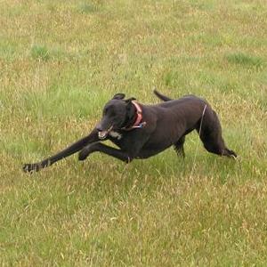Turninggreyhound