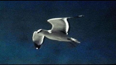 """""""Gulls"""" - David Gray"""