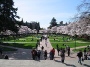 800px-University of Washington Quad, Spring 2007