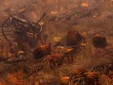 Rotting Croplands